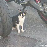 白黒猫と売れ筋セブンミール商品